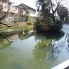 本門寺公園の弁天池に、鴨のこども?がお目見え!