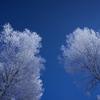 氷点下25℃ 天を仰ぐ