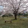 浜松町駅徒歩1 分「旧芝離宮恩賜庭園」の桜です。