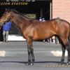 2022年新種牡馬:サトノダイヤモンド