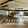 夫婦で出かける=病院に連れていかれる?ジョギングに出かけようとするとなぜかベッド下に隠れる愛猫w