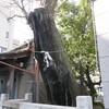 東京大空襲を今に伝えるイチョウの木