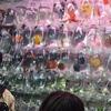 香港の金魚街に行ったお話