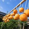 農作業メモ 平成25年11月11日~20日