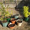 鉢植え替え作業