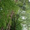 雨上がりの5分間森林浴ウォーキング  in  県営運動公園