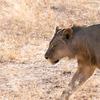 南アフリカのサファリプランニングは動物探し以上に一苦労
