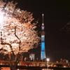 春の隅田川〜夜桜とスカイツリーと赤い提灯〜