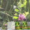 『インスタグラム』動画位置を微調整する方法。