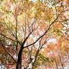 秋の野幌森林公園を散策