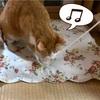 猫はおもちゃをすぐ壊す!喜んで遊ぶヒモは誤飲に注意して遊ぼう