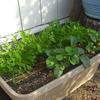 冬の野菜づくり