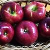 長野県のりんごは本当に美味しい。