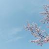 【FUJIFILM】大岡川プロムナードの桜並木