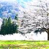 「桜の咲く頃にはいつも思いだす…」episode-12