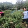 収穫収穫!