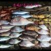 10月は何を釣りますか?【 釣魚録 / in 日本海 】 ※順次更新👍