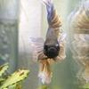 魚と私(飼育編)