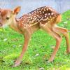 『奈良市の奈良公園で鹿の赤ちゃん誕生か』。。。