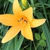 今日は今日の花を咲かせる
