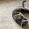 在宅勤務1年で猫に起きたちょっとした変化