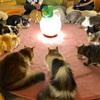 【イベント告知】第106回とだてふゆき猫カフェ貸切もふもふ人狼ゲーム会vol.20