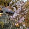 空からドローンで見てみよう ~ 秋色に染まるお寺 ~