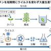田辺三菱、タバコの葉からインフルワクチン 1カ月で製造