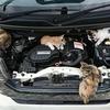 寒暖差の激しいこの時期は『猫噛み』が多発!!ボンネットバンバンで事故の防止を!!(284日目)