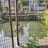 原の水神池(東京都品川)
