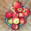 【修正版】安全・安心なリンゴ① ~リンゴの皮と中身とネオニコチノイド系農薬~