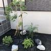 【外構】シンボルツリー③