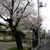 尾久各所と上野と秋葉の花見スポット
