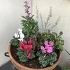 秋の寄せ植えを作ってみました