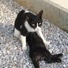 【野良猫保護part4】野良子猫を捕獲して飼うまでの実話