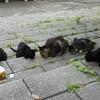 台風の中を生き延びるニャンコ達!