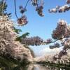 桜開花、3月22日ごろと予想