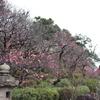 【アラ還さんぽ】大田区「池上梅園」まだ蕾多し、見頃は?(2月8日午前中現在)