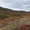 カナダ〜アラスカ旅206日目 デナリバックカントリー最終日