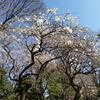 デジカメ散歩 IN 小石川後楽園《古澤郁子さんの作品》