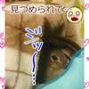 うさぎの写真 25
