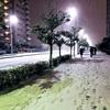 ほんとに天気予報通りに大雪になった!!