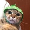【猫ちゃん】ぽっきー コスプレ