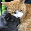 猫の鼻腔内リンパ腫⑥抗がん剤治療4回目 副作用