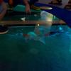 【マツコの知らない世界】オススメの水族館に行ってみた。相模川ふれあい科学館