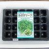 おすすめ野菜の「わさび菜」をトレイ栽培します。サラダ用に柔らかく育てます