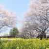 2019町田さくらまつり 開催情報 その3
