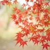 地元の紅葉 【檜尾山 観心寺】Ⅶ