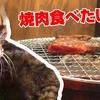 【焼肉安安】あいさん、ひとり焼肉に挑戦!?