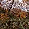紅葉の花貫渓谷に行ってきました